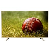 Micromax 50K2330UHD 49 Inch 4K Ultra HD Smart LED Television